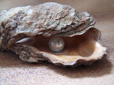 oyster-1327311_640