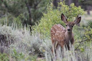 deer-417607_640