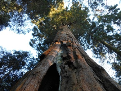 big-tree-1034394_640