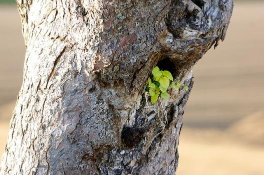 tree-340622_640