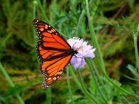 butterfly-1575701_640