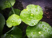 leaf-1551217_640