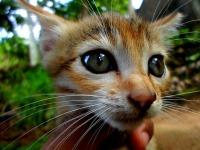 cat-205651_640