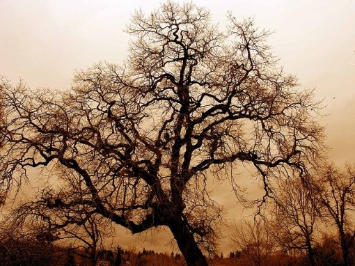 gnarled-old-oak-1166907_640
